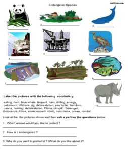 10 Environmental issues vocabulary and language exercises